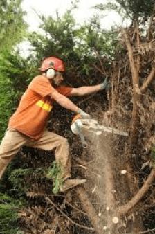tree, arborist